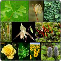 icon teste Cat de bine cunosti plantele