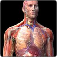 icon teste Curiozitati despre corpul uman